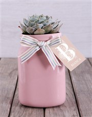 Personalised Potted Succulent
