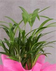 Personalised Wrapped Areca Bamboo