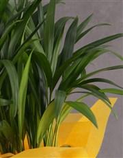 Personalised Cheerful Areca Bamboo