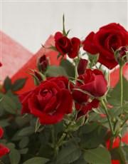 Rose Bush And Delicious Delights