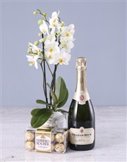 Soothing Midi Orchid