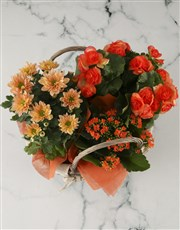 Orange Blooms Basket Arrangement