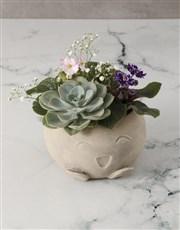 African Violet Garden In Mojo Pot
