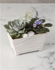 African Violet Garden In Ceramic Pot