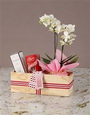 Sweet and Serene White Orchid