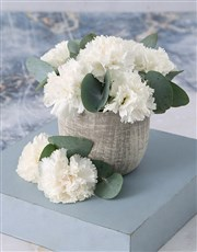 Immaculate White Carnations in a Pot