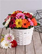 Basket Of Mixed Gerbera Daisies