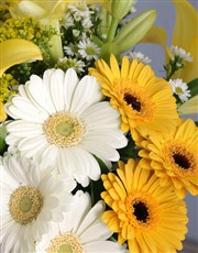 Sunbright Daisies in a Vase