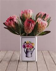 Proteas in a Printed Tin