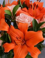 Sensational Orange Variety