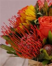 Majestic Colour Blossoms