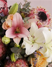 Moonlight Protea Blooms