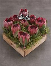 Pink Protea Blossoms