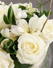 White Elegant Sensations