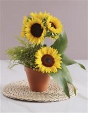 Sunflower Lollipop Tree
