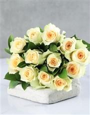 Cream Roses in Cellophane