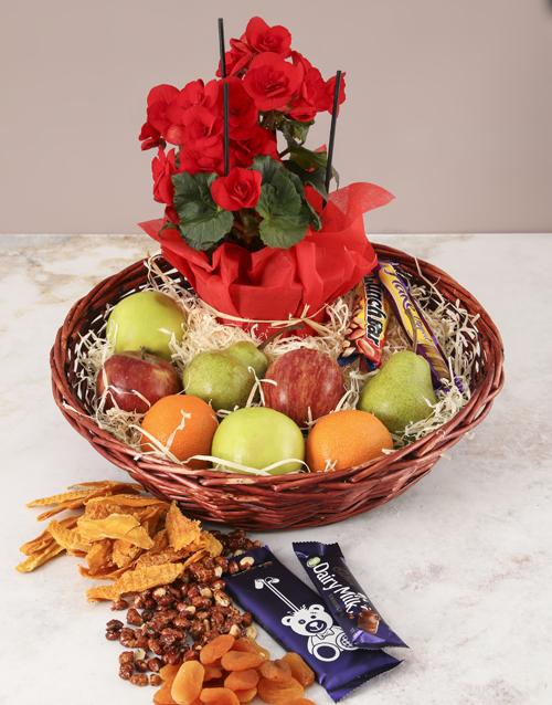 get-well: Brimming Gourmet Begonia Basket!