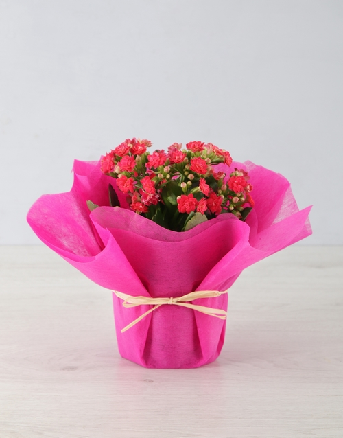 birthday: Colourful Kalanchoe in Tissue Paper!