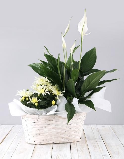baskets: Mixed Spathiphyllum Basket!