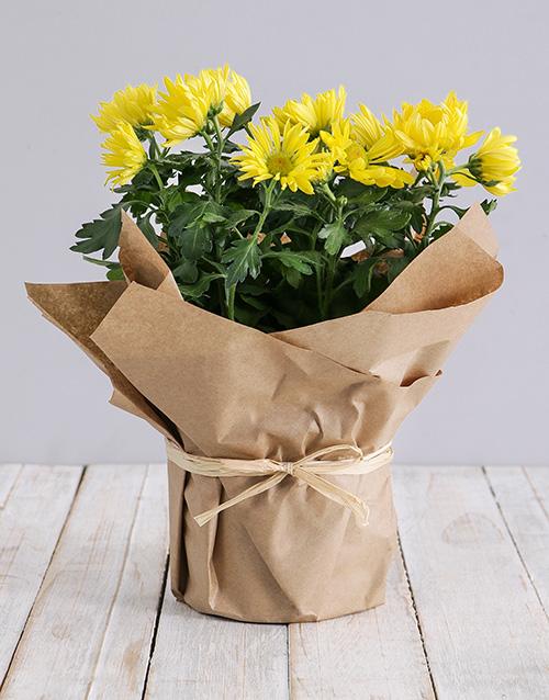 colour: Chrysanthemum Plant in Craft Paper!