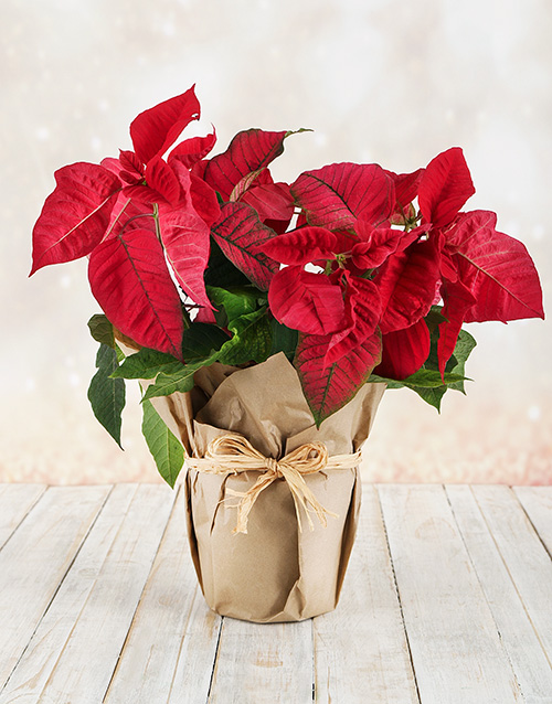 year-end: Poinsettia Wrapped in Craft Paper!