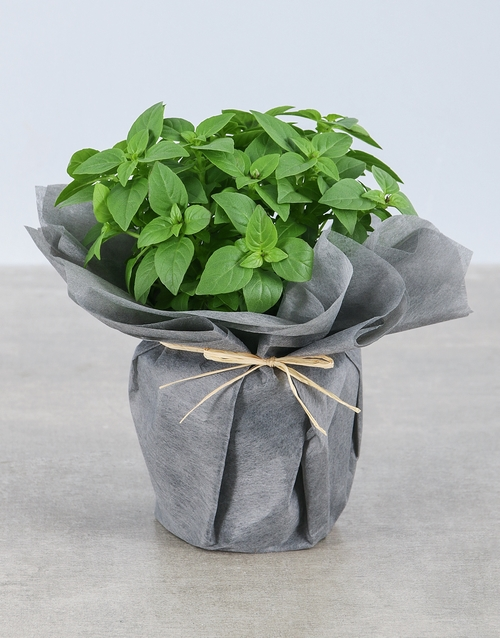 green: Basil Herbs in Wrapping!