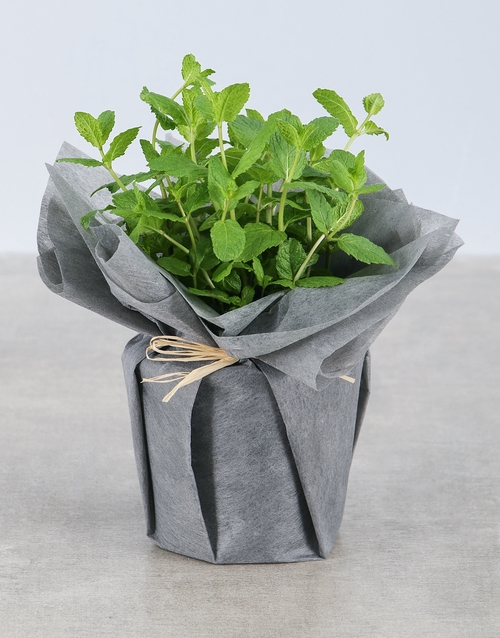 birthday: Mint Herbs in Wrapping!