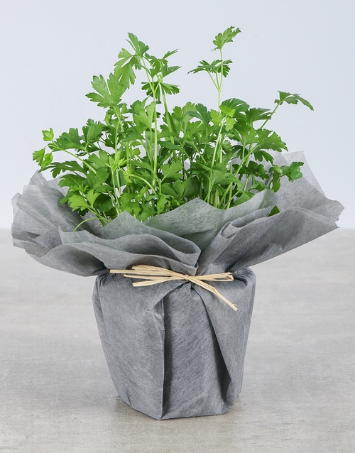 friendship: Parsley Herbs in Wrapping!