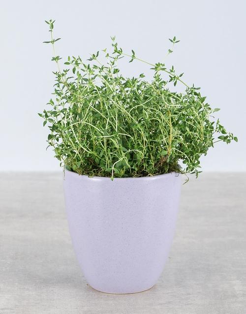green: Thyme Herbs in Glazed Pot!