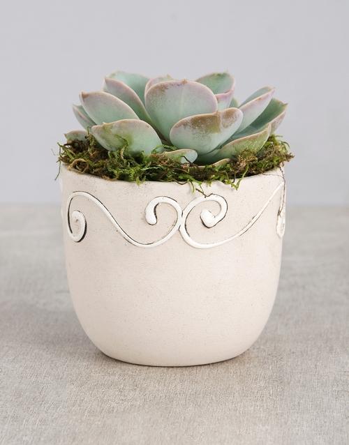 green: Succulent in a Ceramic Pot!