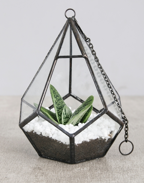 fathers-day: Succulent in Looped Vase White Stones!