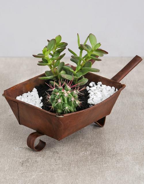 green: Cactus and Succulent Wheelbarrow!