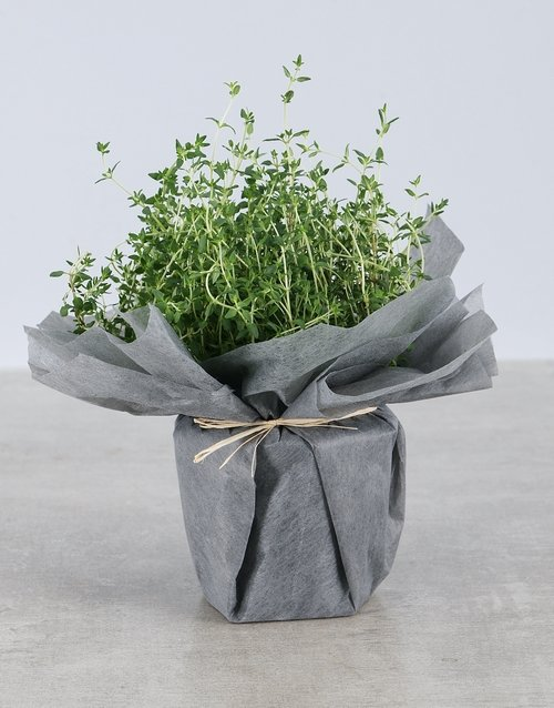 friendship: Thyme Herbs in Wrapping!