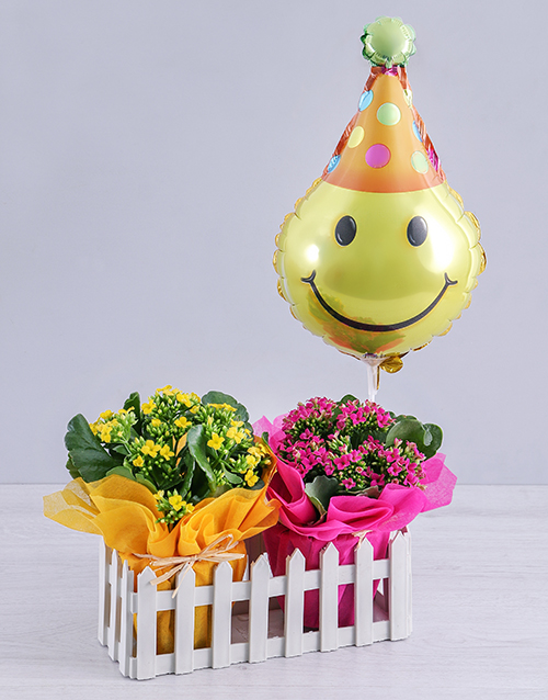 birthday: Kalanchoe Plants and Smiley Balloon in Fence!
