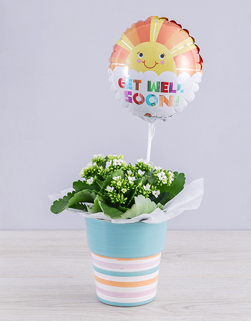 colour: White Kalanchoe Plant and Get Well Balloon Gift!