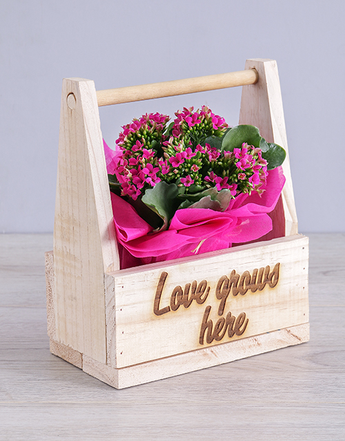 colour: Love Grows Here Kalanchoe Crate!