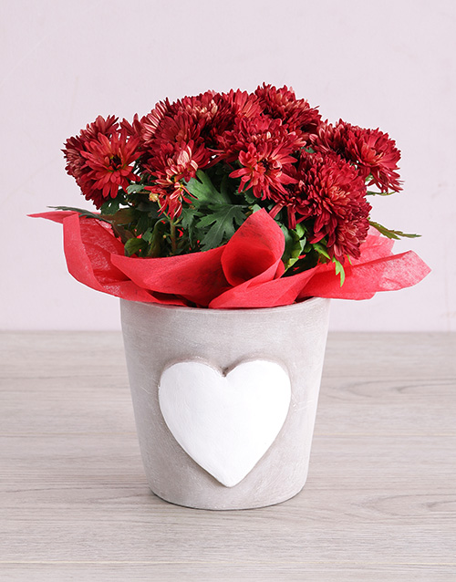 anniversary: Maroon Chrysanthemum in Heart Pottery!