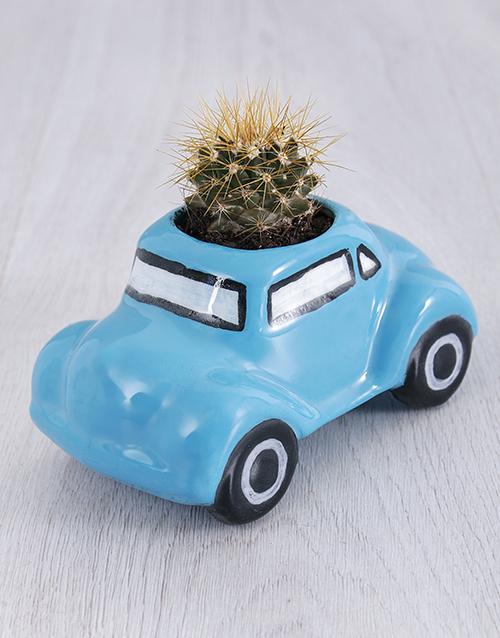 christmas: Succulent in Ceramic Beetle!