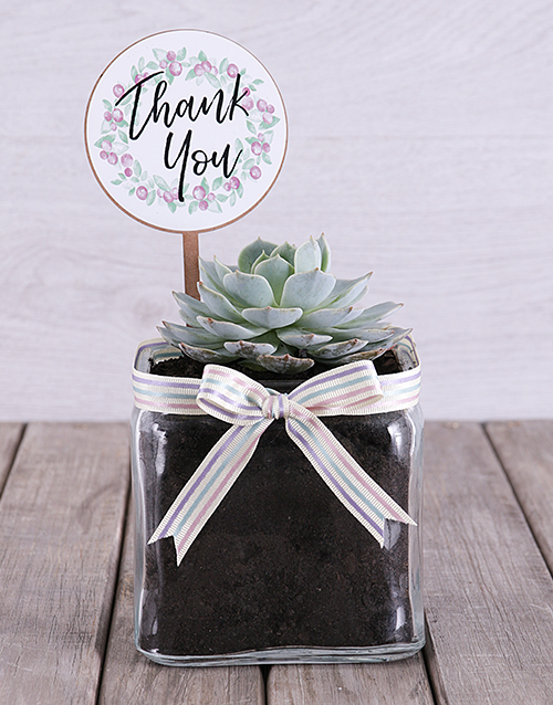 year-end: Thank You Succulent in Square Vase!