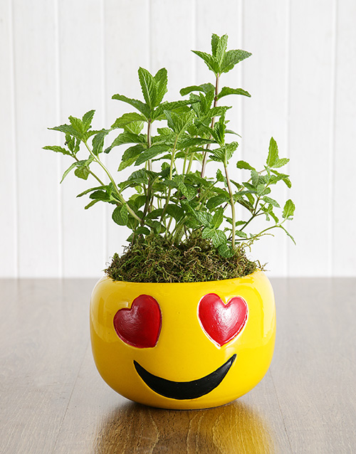 anniversary: Herbs in Heart Eyes Emoji Pot!
