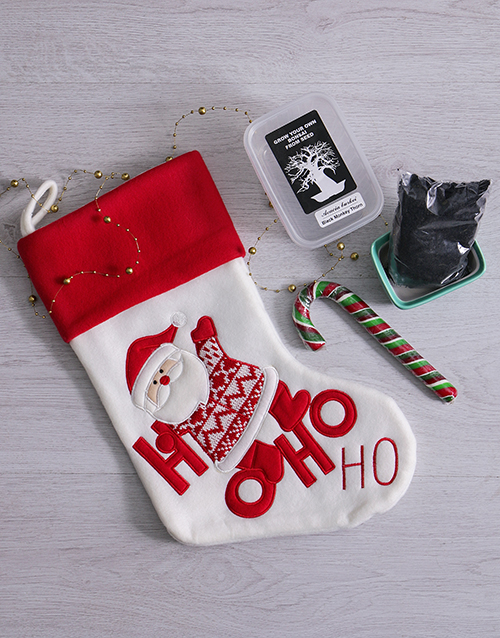 christmas: Bonsai and Candy Cane Christmas Stocking!