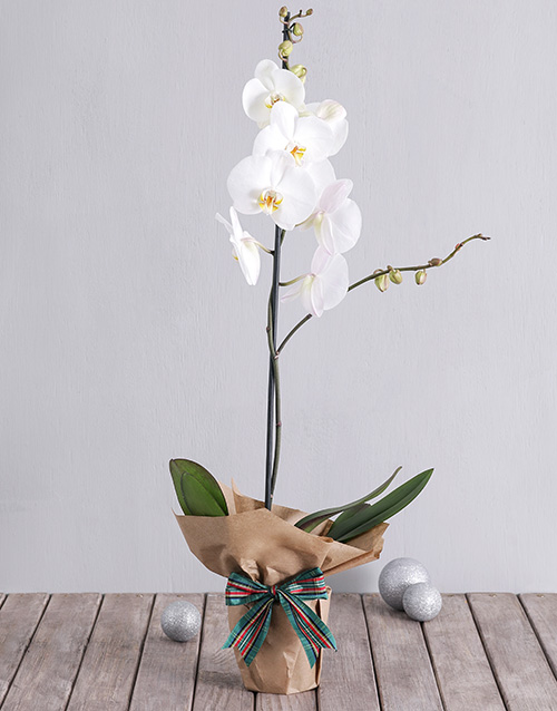 year-end: White Phalaenopsis Orchid in Craft Paper!