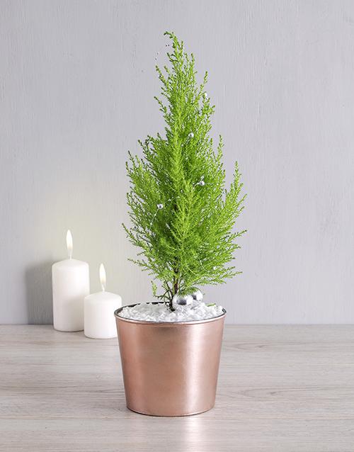 year-end: Goldcrest in Copper Pot!