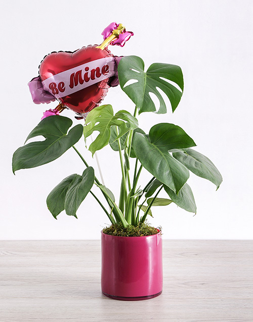 love-and-romance: Be Mine Monsteria Plant!