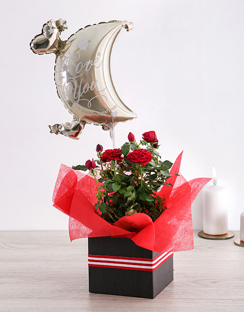 anniversary: Moon and Back Rose Bush Box!