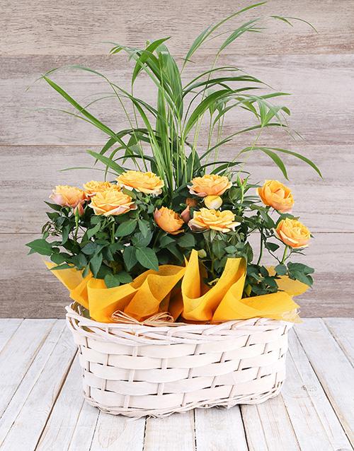 basket: Double Rose Bush and Bamboo Basket!