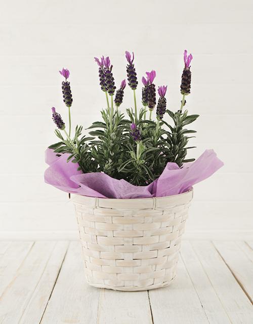 baskets: Sweet Devotion!