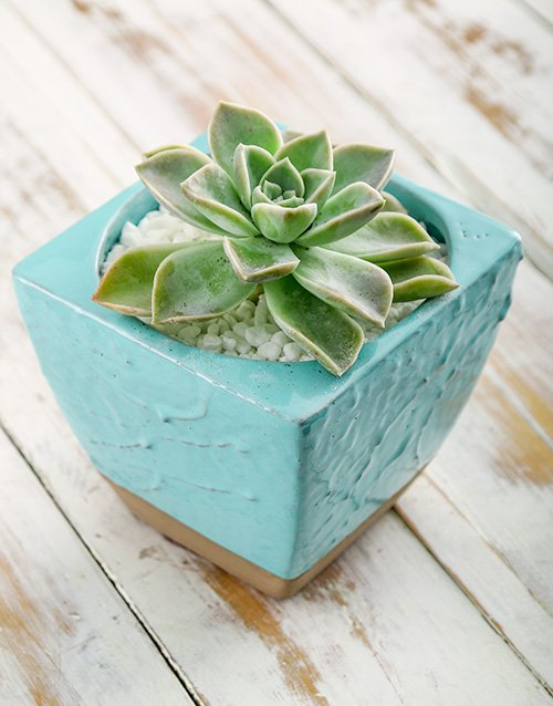 green: Tranquil Potted Succulent!