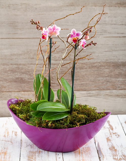 colour: Orchids in a Boat!