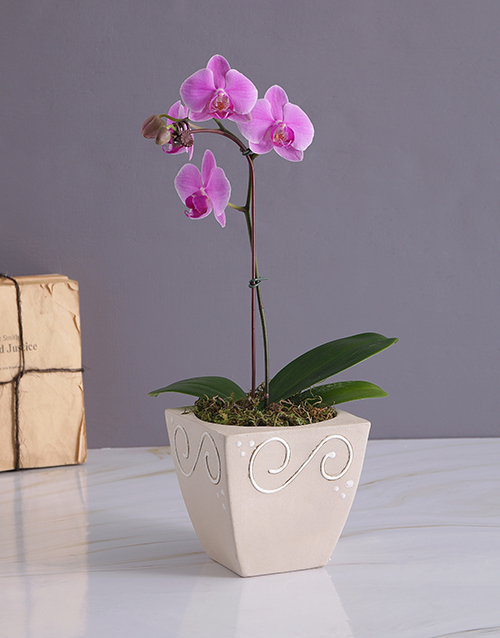 apology: Exotic Orchid in Pottery Vase!